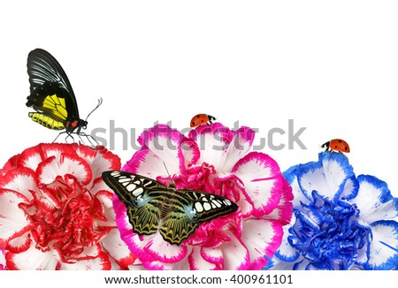 Colorful carnation flowers with butterflies isolated on white background - stock photo