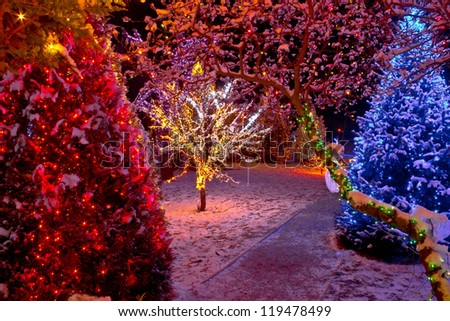Colorful Christmas lights on trees, glowing nature - stock photo