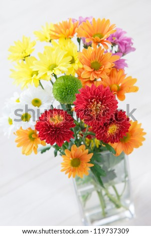 Colorful chrysanthemum with white background - stock photo