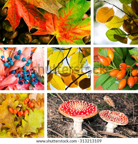 colorful collage of autumn leaves, brier, toadstool and others - stock photo