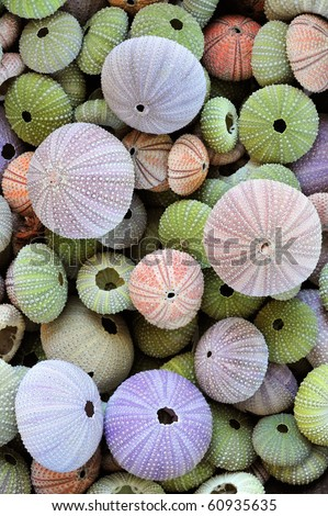 Colorful collection of sea urchin shells with a variety of sizes - stock photo