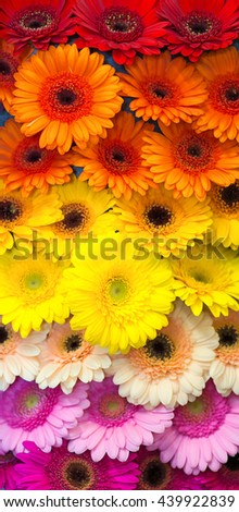 Colorful composition from different flowers. - stock photo