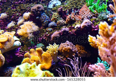 Colorful coral in South East Asia Aquarium, Resort World Sentosa, Singapore - stock photo