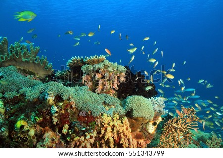 Colorful Coral Reef against Blue Water. Gam, Raja Ampat, Indonesia