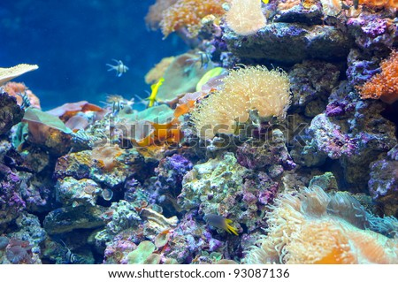 Colorful coral reef deep underwater - stock photo