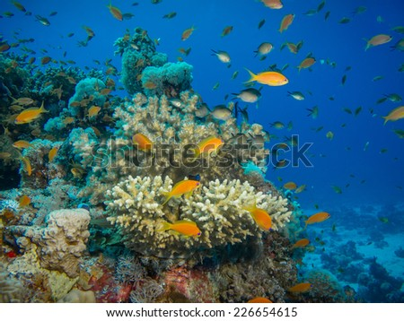 Colorful coral reef off the coast of Hurghada, Egypt - stock photo