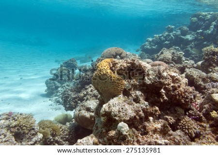 colorful coral reef under the surface of water in tropical sea,  underwater - stock photo