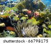 Colorful coral reef with fish in Panama, Bocas del Toro, Caribbean sea - stock photo