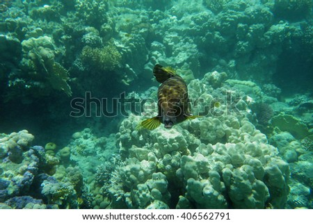 Colorful coral reef with fishes
