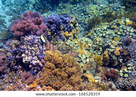 Colorful coral reef with hard corals at the bottom of tropical sea Indonesia, island Menjangan. underwater photo - stock photo
