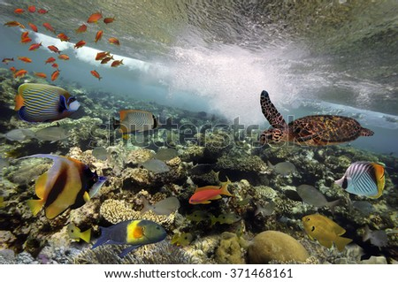 colorful coral reef with many fishes and sea turtle. - stock photo