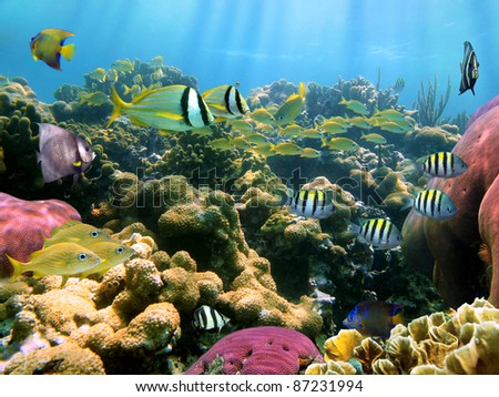 Colorful coral reef with school of tropical fish - stock photo