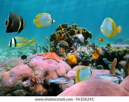 Colorful coral reef with tropical fish and a starfish - stock photo