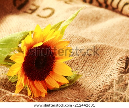 Colorful country background with a bright yellow sunflower lying on a piece of natural fiber woven burlap with copyspace - stock photo