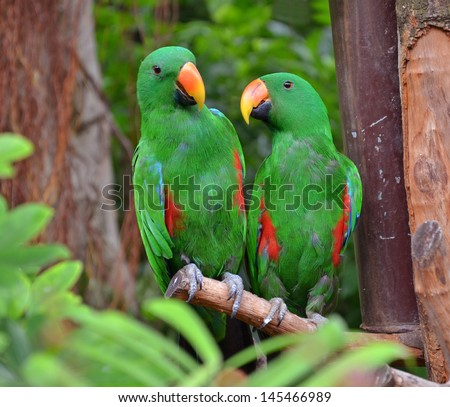 colorful couple macaw sitting in a tree - stock photo