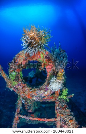 Colorful Crinoids on an underwater wreck - stock photo