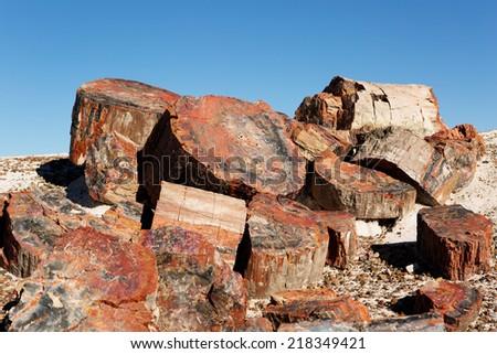 colorful crystallized petrified tree trunks in Arizona - stock photo
