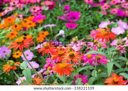 Colorful Daisies In A Field | www.pixshark.com - Images ...