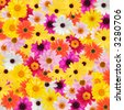 Colorful daisy background - stock photo