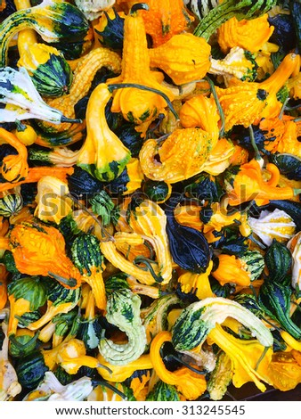 Colorful decorative gourds at the autumn market. - stock photo