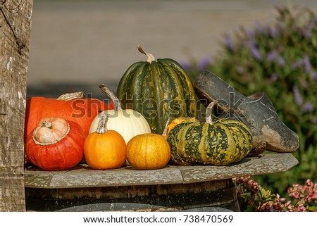 Colorful decorative pumpkin collection displayed in the garden