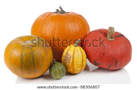 colorful decorative pumpkins isolated on a white background - stock photo