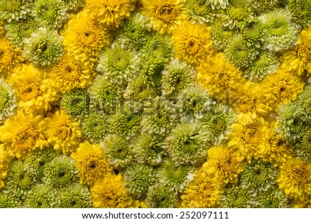 Colorful design pattern of flower texture and background