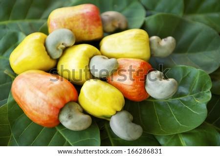 Colorful display of fresh ripe Brazilian caju cashew fruit in red, orange, and yellow on green leaves - stock photo