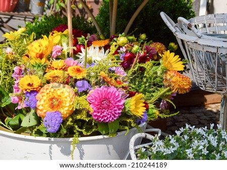 colorful display with asters at a florist