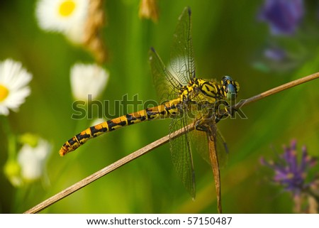 Colorful Dragonfly on a Colorful Lawn - stock photo