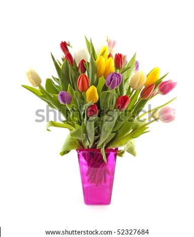Colorful Dutch tulips in pink vase over white background