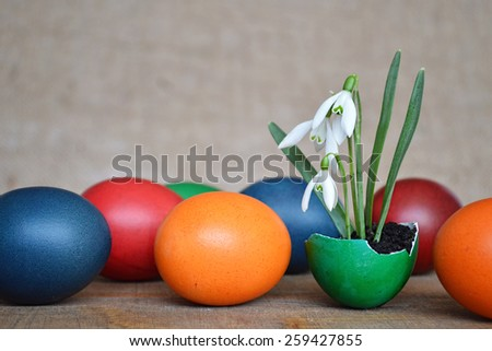 Colorful Easter eggs and snowdrops on wooden table - stock photo