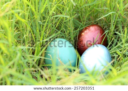 Colorful easter eggs hidden in dense grasses.