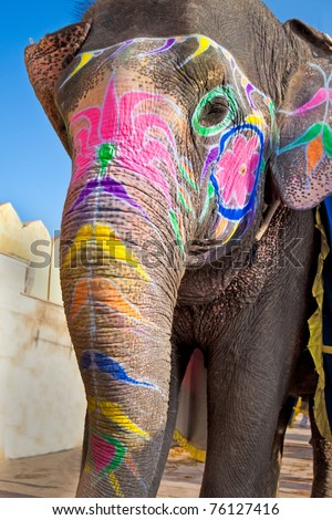 Colorful elephant with large trunk in India - stock photo