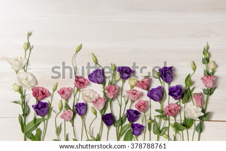 Colorful eustoma flowers on white wooden background - stock photo