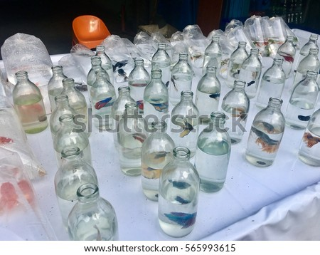 Malaysia flag national day stock photo 466402763 for Aggressive fish for sale