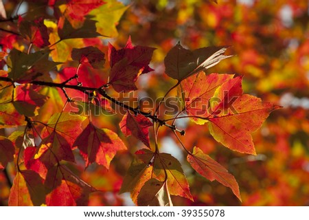 Colorful fall autumn leaf detail background
