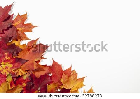 Colorful fall autumn leaf frame border on white background - stock photo