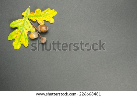 Colorful fall decoration with oak tree leaves and acorns at dark background - stock photo