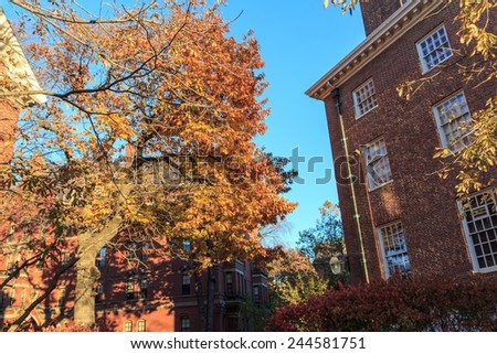 Colorful fall foliage and historic dorm buildings on the campus of Harvard University in Cambridge, MA, USA. - stock photo