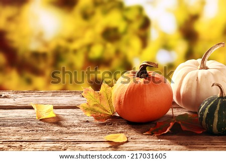 Colorful fall harvest with an orange and a white pumpkin with a variegated green and white squash on an old rustic wooden table in a garden with golden autumn foliage - stock photo