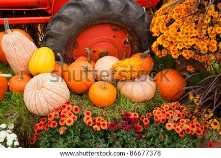 Colorful Fall holiday decorations at the farm. - stock photo