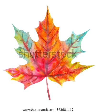 Colorful fall leaf. Watercolor illustration