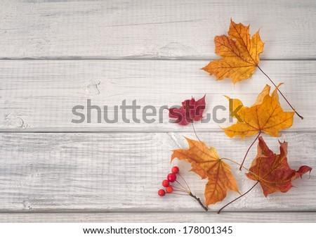 Colorful Fall Leaves and Red Berries on White and gray wood background with space or room for copy, text, words.  Horizontal  - stock photo
