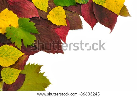 Colorful fall leaves compose on white background