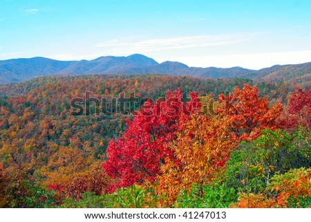 colorful fall leaves in the mountains - stock photo