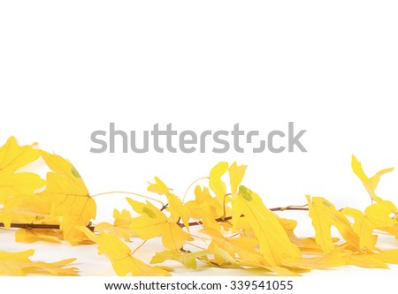 Colorful Fall leaves isolated on white background - stock photo