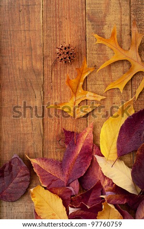 Colorful Fall Leaves on Rustic Wood Boards with Space for Copy or Text. - stock photo