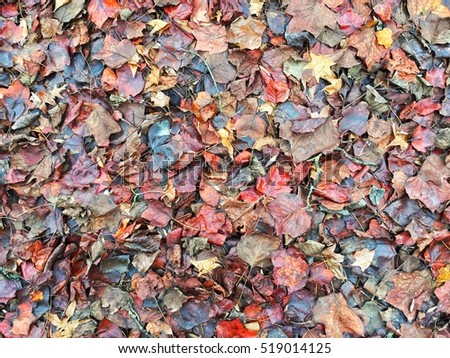 Colorful fall leaves on the ground in a forest wooded area