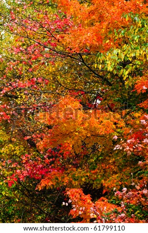 Colorful fall leaves with green leaves in the background - stock photo